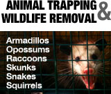 Animal Trapping and Wildlife Removal