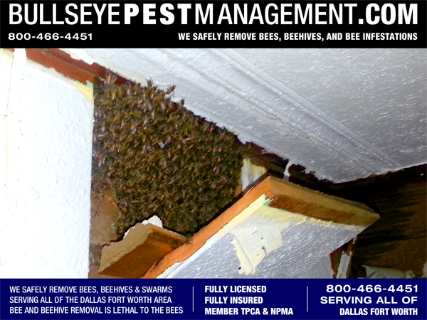 Bee Removal in Fort Worth Texas - Close up view of the panel removed revealing the bee hive.
