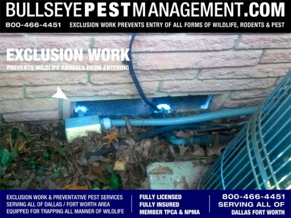 Exclusion Work is a hand-in-hand necessary part of rodent control.  If Bullseye Pest Management does not identify and seal up the access points of your home, rodent bait and poisons will only be a temporary band-aid to the revolving door of entering rodents and pest.