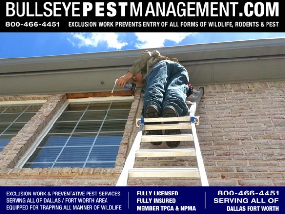 Exclusion Work is not just for rodents and animals.  Here Bullseye Pest Management Owner / Operator Steve Moseley seals gaps in a window facing allowing access for bees to enter the attic where they were attempting to start a hive.