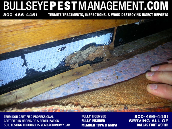 Termite Damage Inspected by Bullseye Pest Management