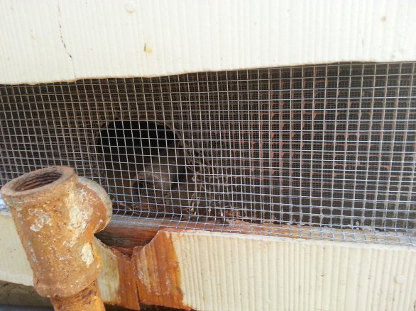 After Exclusion Work for Opossum and Rats