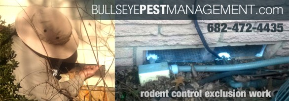 Bullseye Pest Management Rodent Control Exclusion Work in Fort Worth