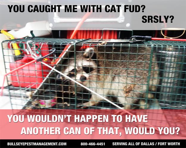Animal Trapping Services Raccoon Arlington Texas