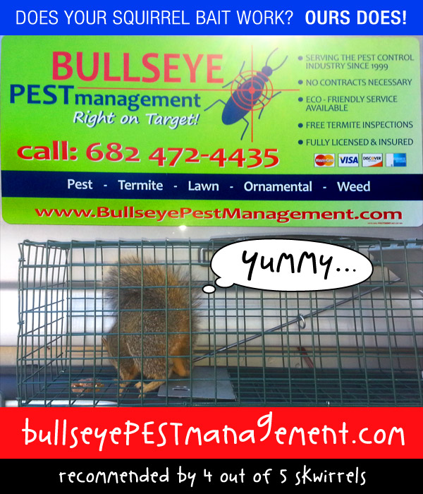 Bullseye Pest Management Removes Squirrel From Fort Worth Business Office.