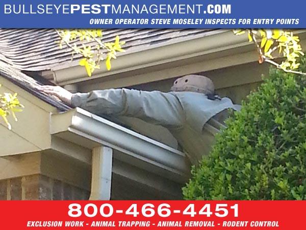 Bullseye Pest Management Owner / Operator Steve Moseley 2 Stories Up Inspecting for Animal Entry Points