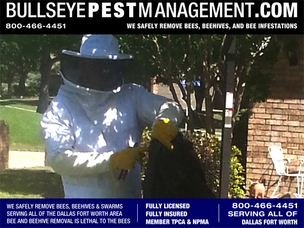 Bee Removal by Bullseye Pest Management in McKinney Texas.
