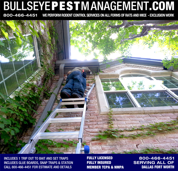 Pest Control in Arlington Texas by Bullseye Pest Management | Certified Applicator Steve Moseley performs Exclusion Work.