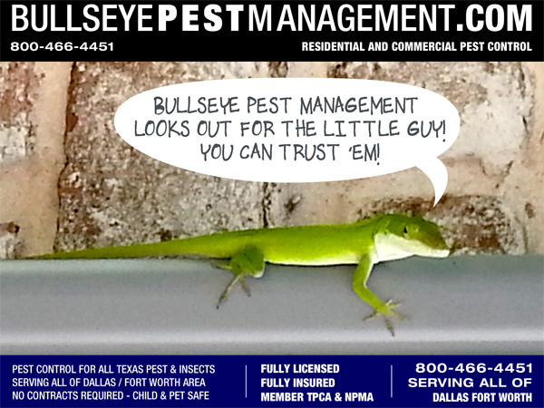 Bullseye Pest Management is serious about, and highly informed on, Eco-friendly Pest Control.