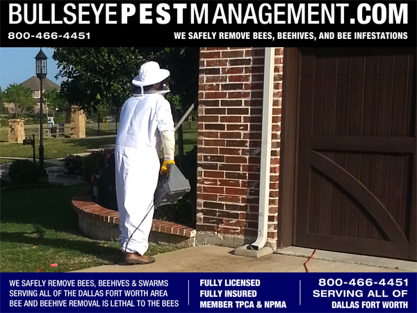 Bee Removal Dallas Texas – Bullseye Pest Management Removes Bees and Beehive and Honeycomb from Residential and Business Structures all over Dallas Fort Worth.