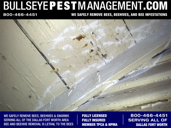 Beehive Removed in Venus Texas by Bullseye Pest Management 800-466-4451