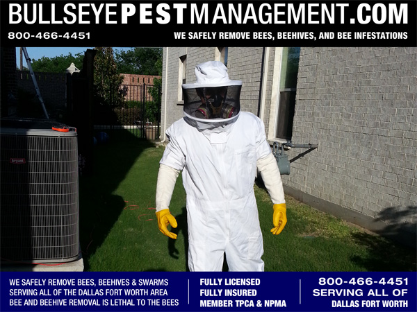 Bee Removal Suit with Bullseye Pest Management Owner / Operator Steve Moseley