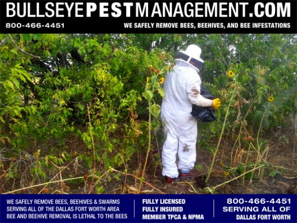 Bullseye Pest Management performs bee removal all over Dallas Fort Worth and surrounding areas.