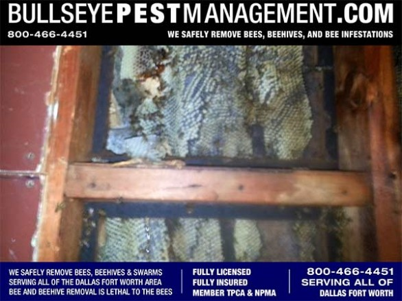 Bee Removal in Dallas by Bullseye Pest Management Licensed and Insured at 800-466-4451