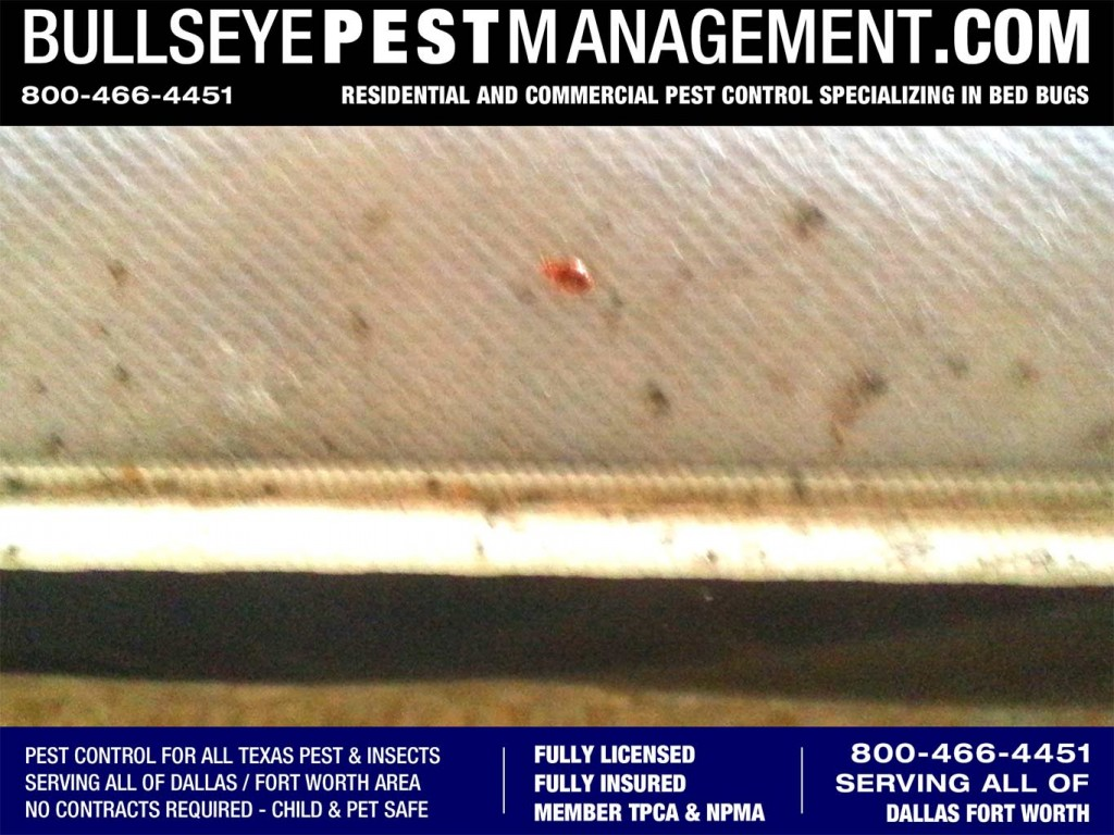 Bed Bugs Specialized by Bullseye Pest Management