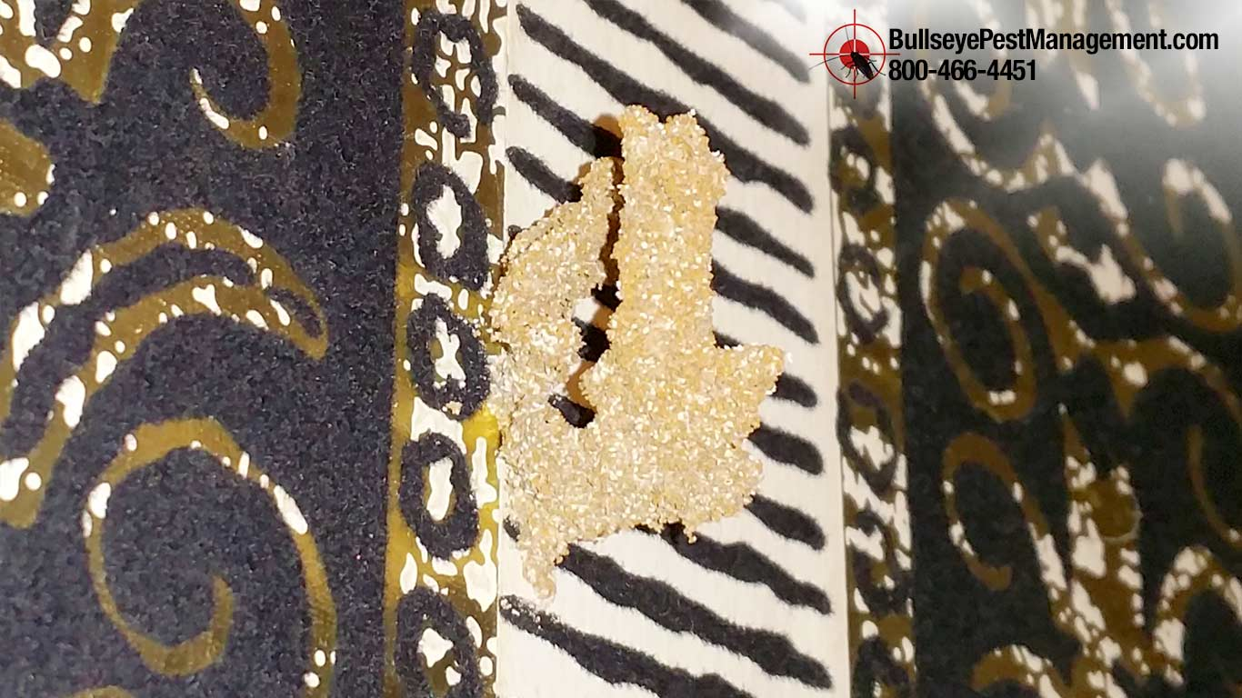 Termite Treatment by Bullseye Pest Management Termidor SC Exclusive 682-472-4435