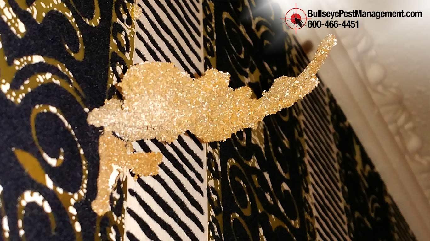 Termite Wallpaper Mudtube in Mansfield - Bullseye Pest Management (682) 472-4435