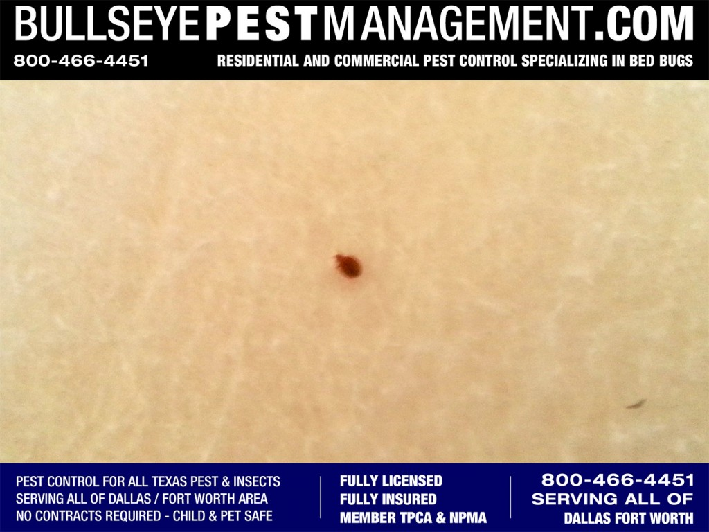 Bedbugs Pest Control for all of Dallas, Arlington and Fort Worth.