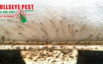 Bedbug Treatment By Bullseye Pest Management In Arlington Texas