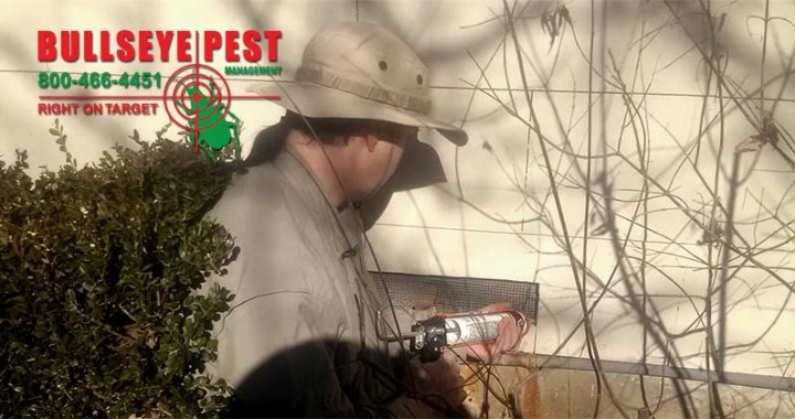 Exclusion Work To Keep Out Wildlife By Bullseye Pest Management