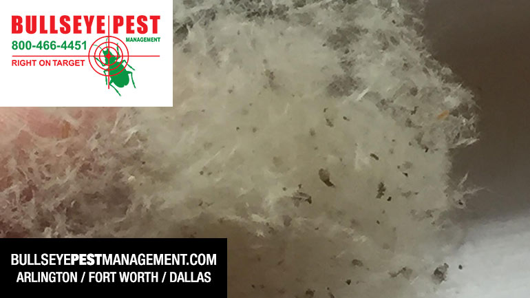 Acrobat Ant Debris In Window Sill Bullseye Pest Management