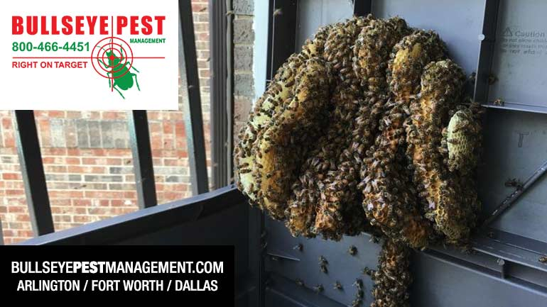 Bee Removal Mansfield Dallas Fort Worth