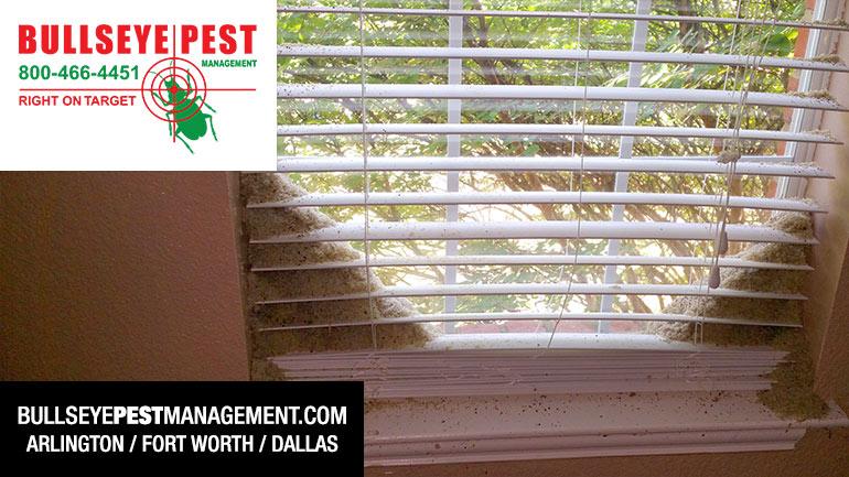 Window Blinds Full Of Debris From Acrobat Ants