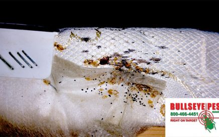 Bed Bug Problems Out of Control? Call Bullseye Pest Management