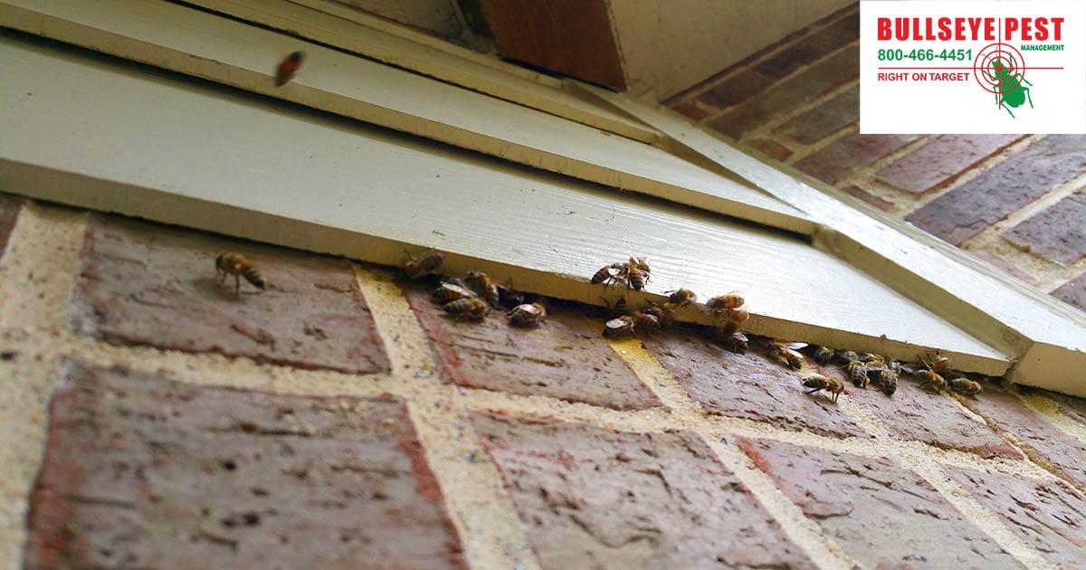 Bee Removal Dallas Bullseye Pest Managment