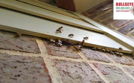 Bee Removal Fort Worth Bullseye Pest Managment
