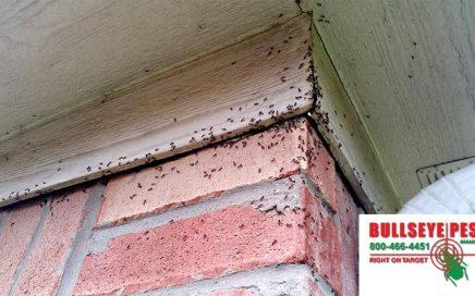 Ant Pest Control Bullseye Pest Management