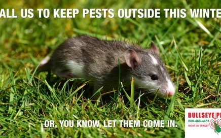 keep pests out this winter call bullseye pest management