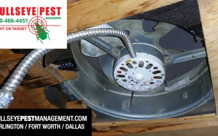 Bullseye Pest Exclusion Work Attic Fan Before