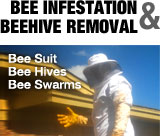 Bee Infestation and Beehive Removal