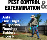 Pest Control and Extermination