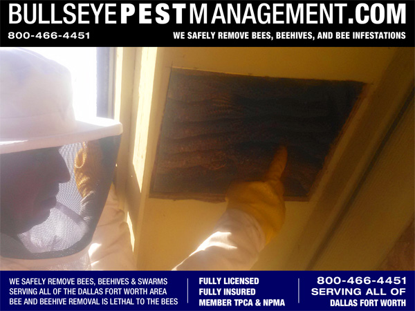 Bee Removal Services by Bullseye Pest Management in all of Dallas Fort Worth