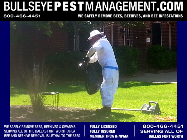 Bee Removal - Shown here is one of the rare times that conditions lined up where we were able to save the majority of the bees and remove them without killing them.