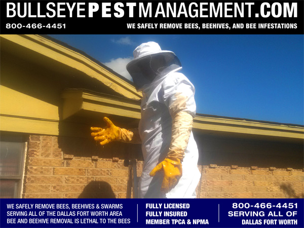Beehive Removal Services by Bullseye Pest Management in Arlington TX serving all of Dallas Fort Worth