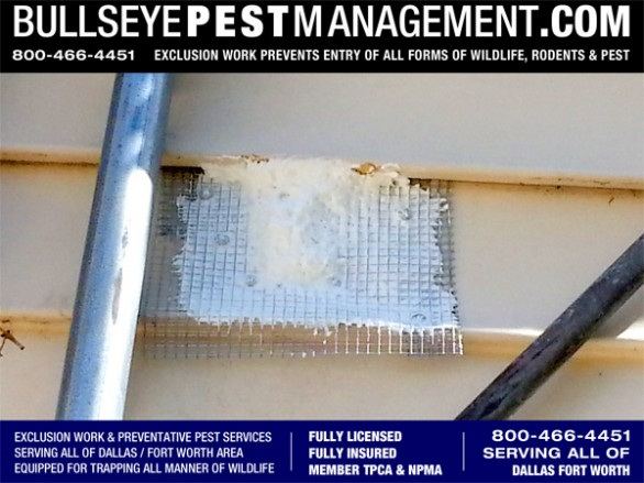 Exclusion Work is an affordable action towards deterring pests from entering your home.  Without Exclusion Work insects, rodents and wildlife will continue to enter your home or building through established entry points.