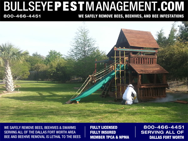 Beehive Removal by Bullseye Pest Management In Wylie Texas.