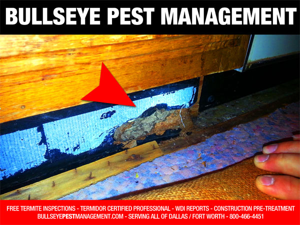Termites cause billions of dollars in damage to homes and businesses in the United States each year.