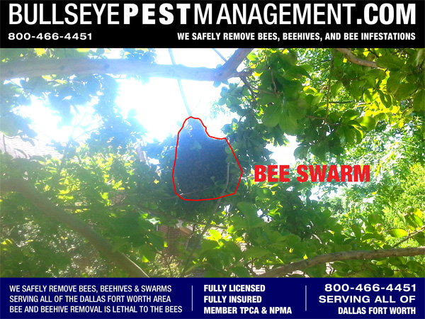 Bee Removal in McKinney Texas by Bullseye Pest Management.