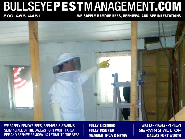 Bee Removal in Fort Worth Texas - Bullseye Pest Management Owner / Operator Steve Moseley points to the pulled panel revealing the presence of bees.