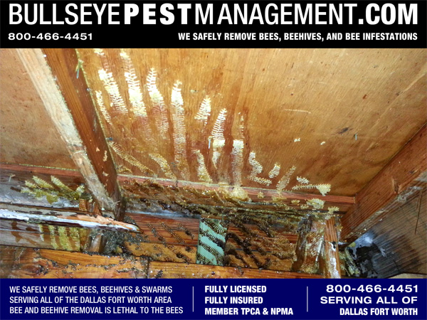 Beehive Removed in Fort Worth Texas - An approximate sixty pounds of beehive removed from the interior walls of this residential remodel.