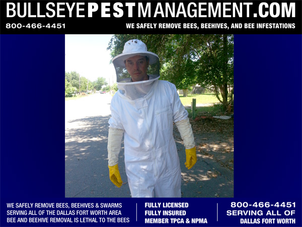 Beehive Removal Fort Worth / Dallas - Bullseye Pest Management 800-466-4451