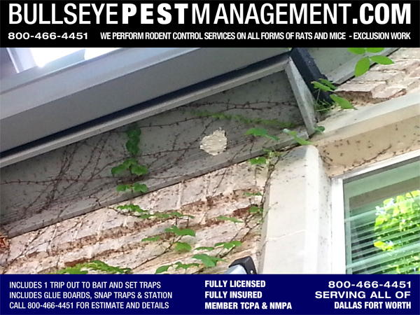 Exclusion Work Prevents Entry of Insects, Rodents and other Pest- in this case, Bees.