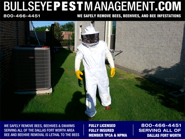 Bee Removal in Dallas Texas | Bullseye Pest Management Owner / Operator Steve Moseley shown here removing bees in Dallas Texas