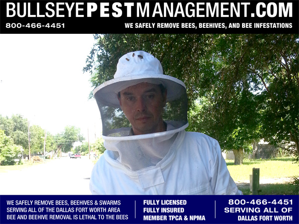 Bee Removal Fort Worth Texas By Owner Operator Steve Moseley of Bullseye Pest Management.