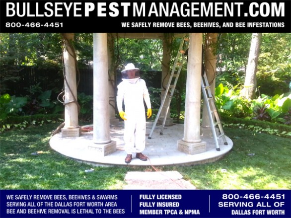 Bullseye Pest Management Owner / Operator Steve Moseley performs bee removal in all of Dallas Fort Worth and surrounding areas.