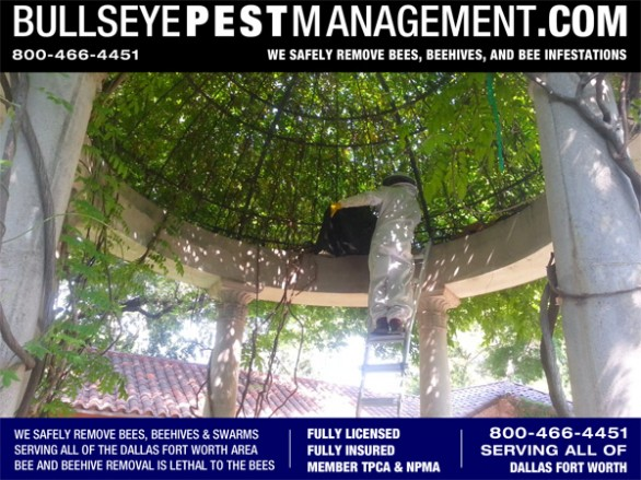 Bullseye Pest Management Owner / Operator Steve Moseley slides a containment sack over an Owl's House that has been taken over by Bees.